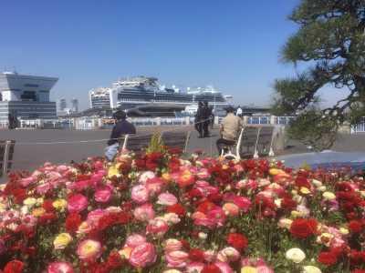 山下公園「ガーデンネックレス横浜2019」